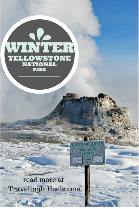 Winter inYellowstone National Park