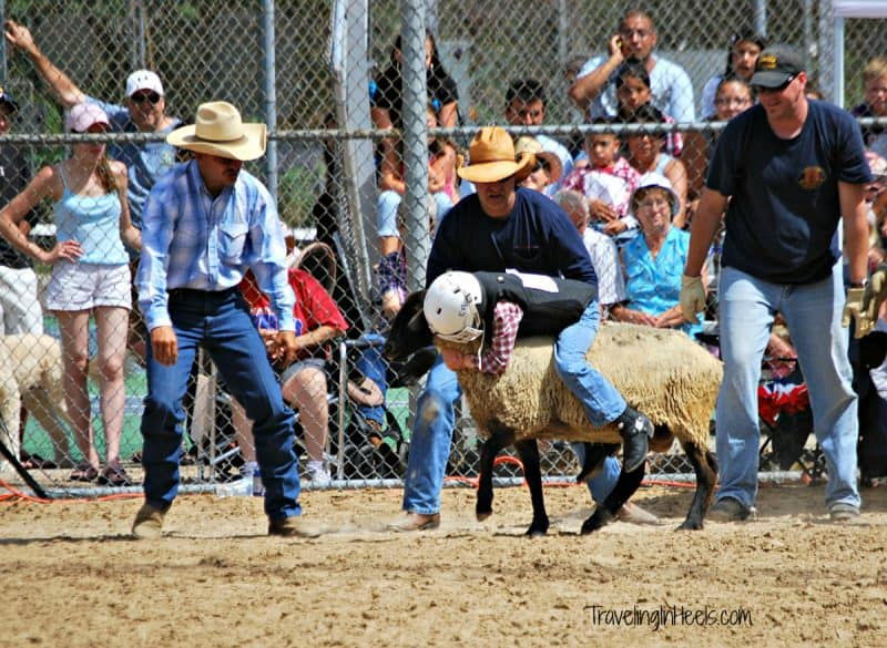 Mutton bustin. Family friendly and Old West fun, the annual Buffalo Bills Day in Golden, Colorado