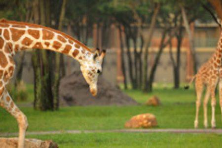Animal Programs Photo: Animal Kingdom Lodge