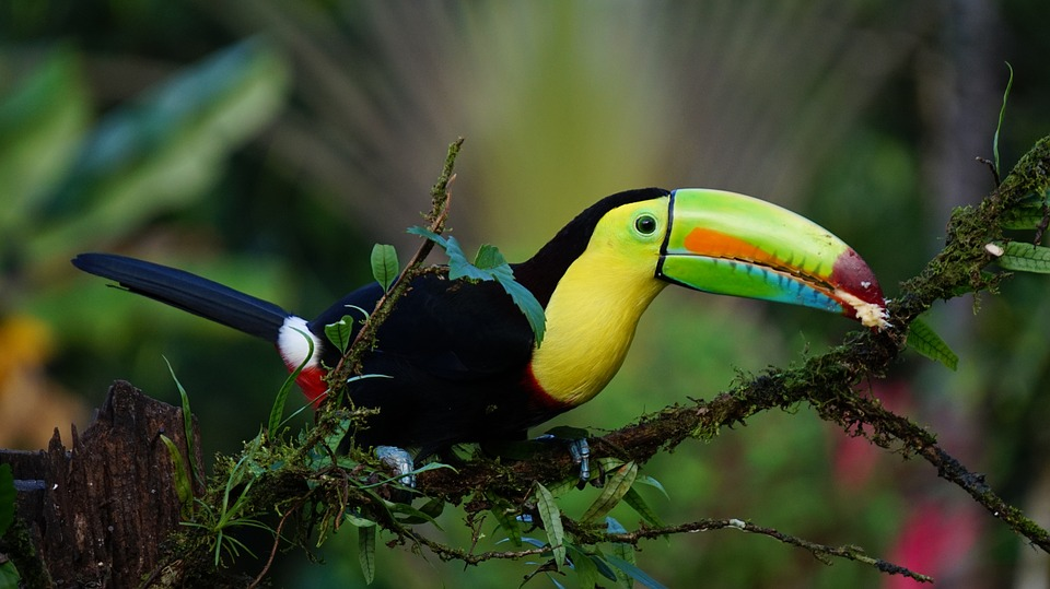 Bird watching is one of many Costa Rica adventures.