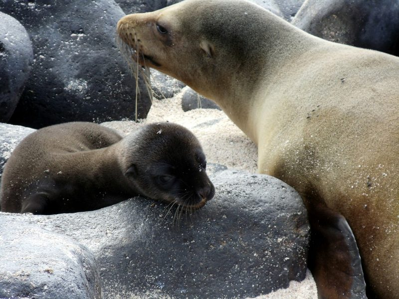 Be greeted by sea lions in The Galapagos Islands.