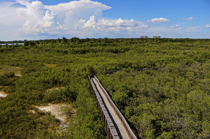 Things to do in Florida outside of Disney World include a walk along a manmade pedestrian bridge.