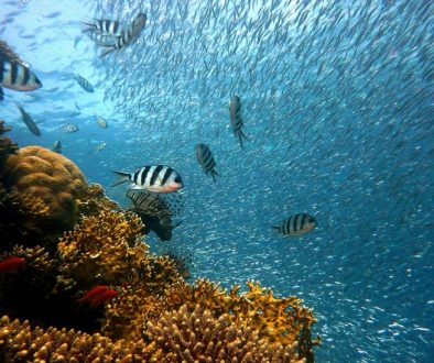 Include scuba diving as one of your Amazing Family Vacation Experiences.