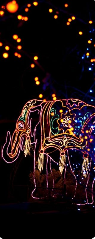 Get wild with a visit to Denver Zoo to see the Zoo lights on New Year's Eve.