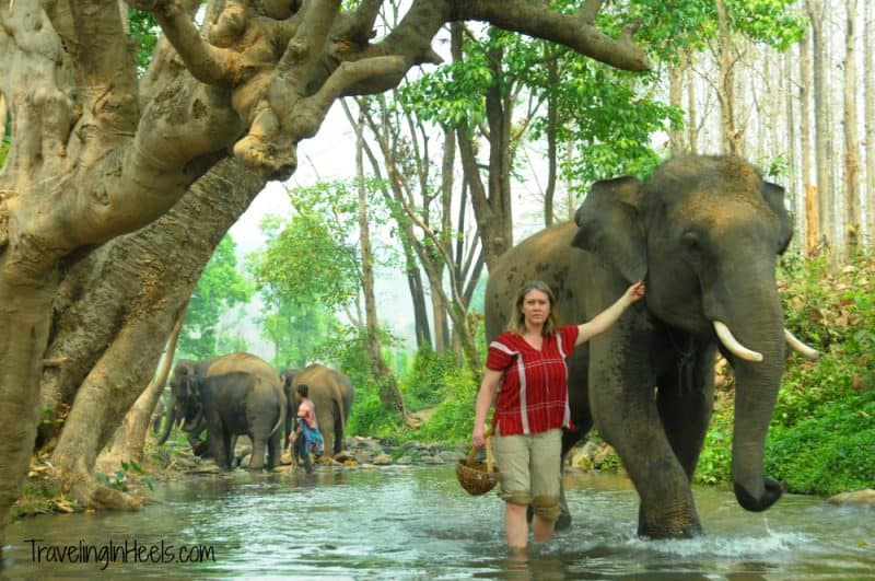 Amazing Adventures in Chiang Mai, Thailand include elephant trainer for a day at Patara Elephant Farm.