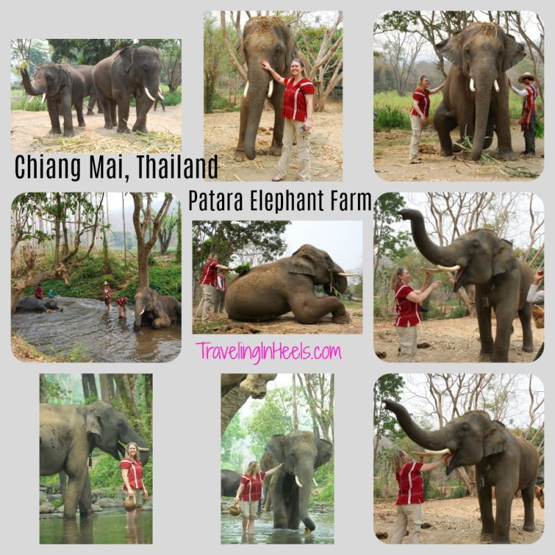 Looking for an aamazing adventure in Chiang Mai? Experience Patara Elephant Farm as an owner for a day.