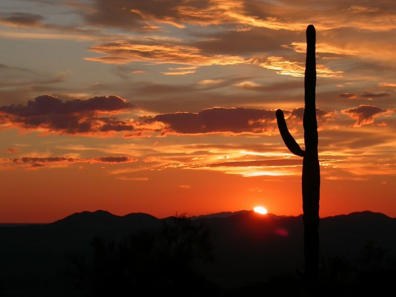 From visiting the Grand Canyon to its beautiful desert landscapes, we've got 5 reasons to visit Arizona.