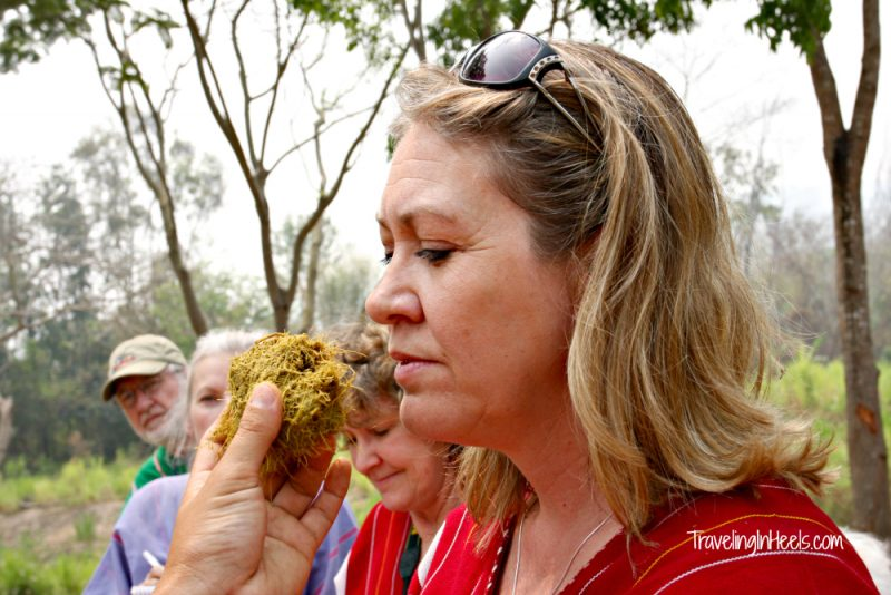 The sweet smell of elephant dung at Patara Elephant Farm - smells like grass.