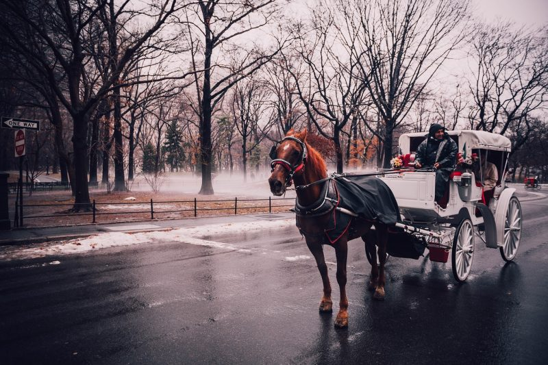 Take a twilight carriage ride, 1 of 5 things to do in New York at night.