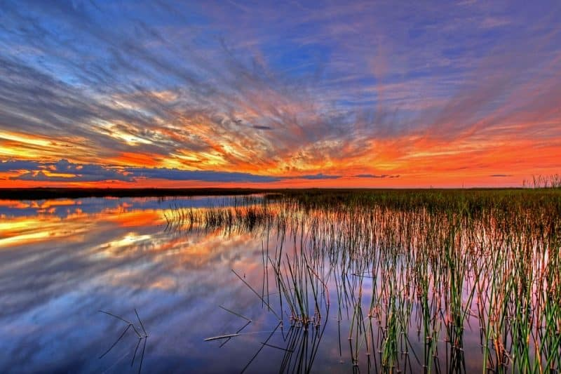 Everglades National Park is a 1.5-million-acre wetlands preserve on the southern tip of the U.S. state of Florida.