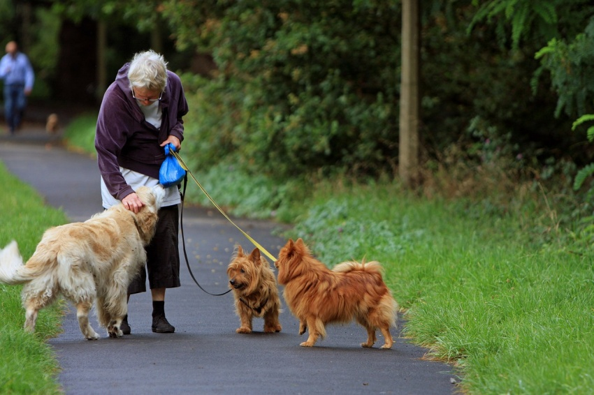 Keep active after 50 by taking your furry friends for a walk