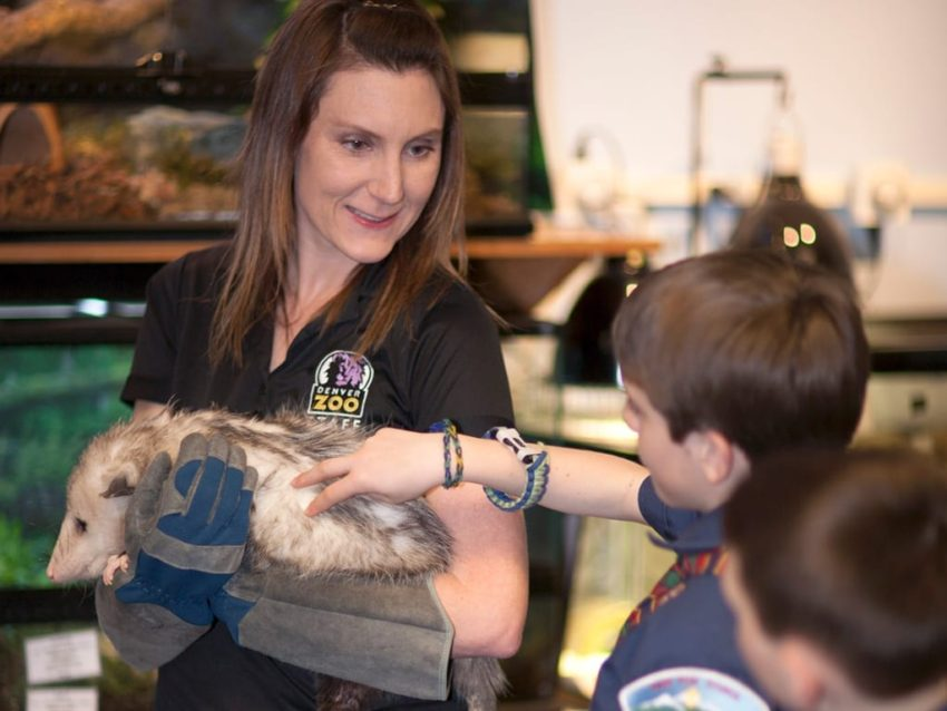 "Get wild on New Year's Eve and let your kids experience ""Bunk with the Best"" at Denver Zoo"
