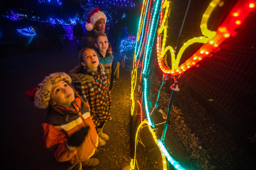 With more than a million lights twinkling over 80 acres, Denver Zoo Lights is the perfect way to make special holiday memories in Denver's most beloved community gathering place