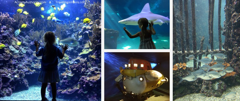 One of the fun things to do in Maui is to visit the Maui Ocean Center, a Hawaiian aquarium with the largest Pacific corals collection in the world.