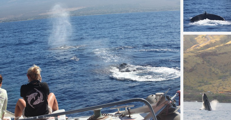 One of the top things to do with kids n Maui is book a Maui whale watch boat