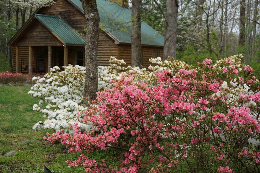 Choose the Smoky Mountains for your next cabin rentals mountain getaway. Photo: Pixabay