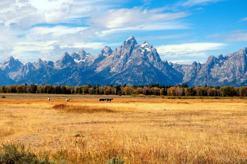 Stay in Jackson Hole and enjoy the Grand Tetons in the fall with Cabin Rentals in the Mountains.