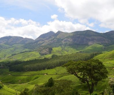 India's southwest state of Kerala is home to the Western Ghats and plush tea plantations.