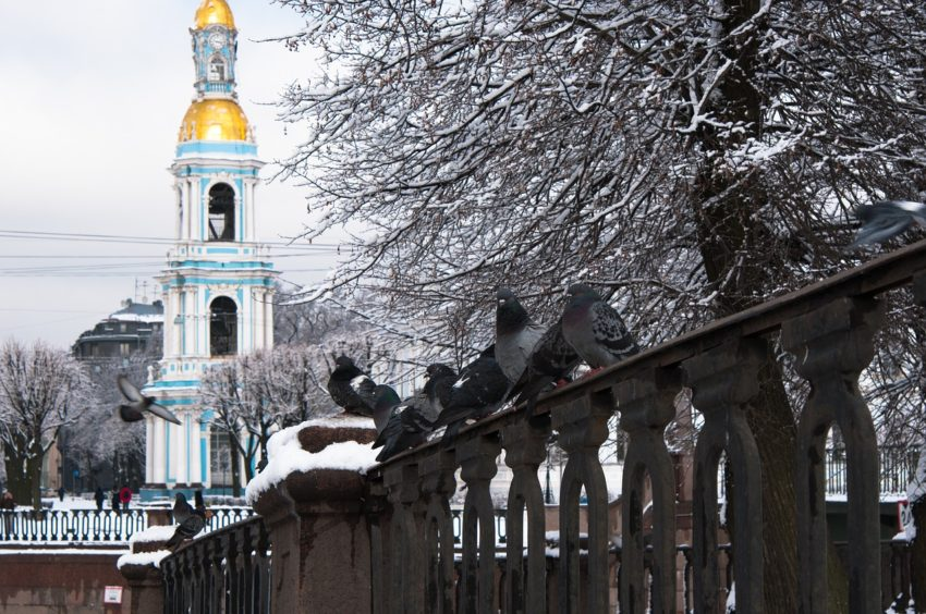 Christmas Markets are one of so many reasons to spend the holidays in St. Petersburg, Russia.