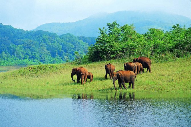 Thekkady is set in the heart of the Cardamom and Pepper Hills of Kerala; this is where the Periyar National Park and Tiger Reserve.