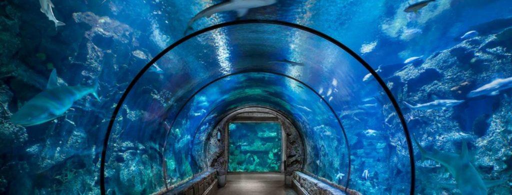 Photo Credit: Shark Reef Aquarium in Mandalay Bay