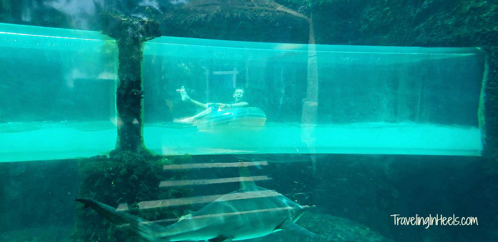 Thrills like sliding through a tube in a shark tank await you at Aquaventure, The Atlantis, Paradise Island, The Bahamas