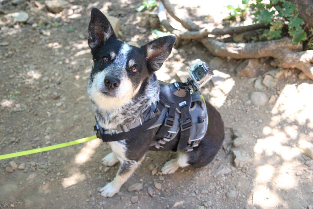 Got dog? Get GoPro for travel photography.
