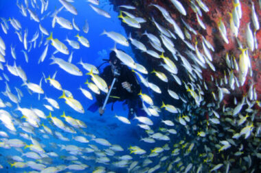 For those wanting to return to the underworld of the sea, consider these scuba diving refresher tips.