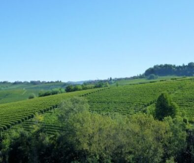 The village of Barolo is located in the idyllic wine country of Piedmont. It's a great place to drink some of the world's best wines, explore the medieval castle, and visit a wine museum!